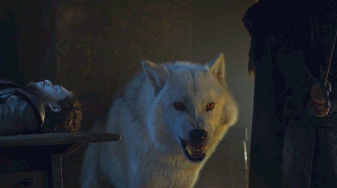 Ghost podría regresar en la temporada 8 — Game of Thrones