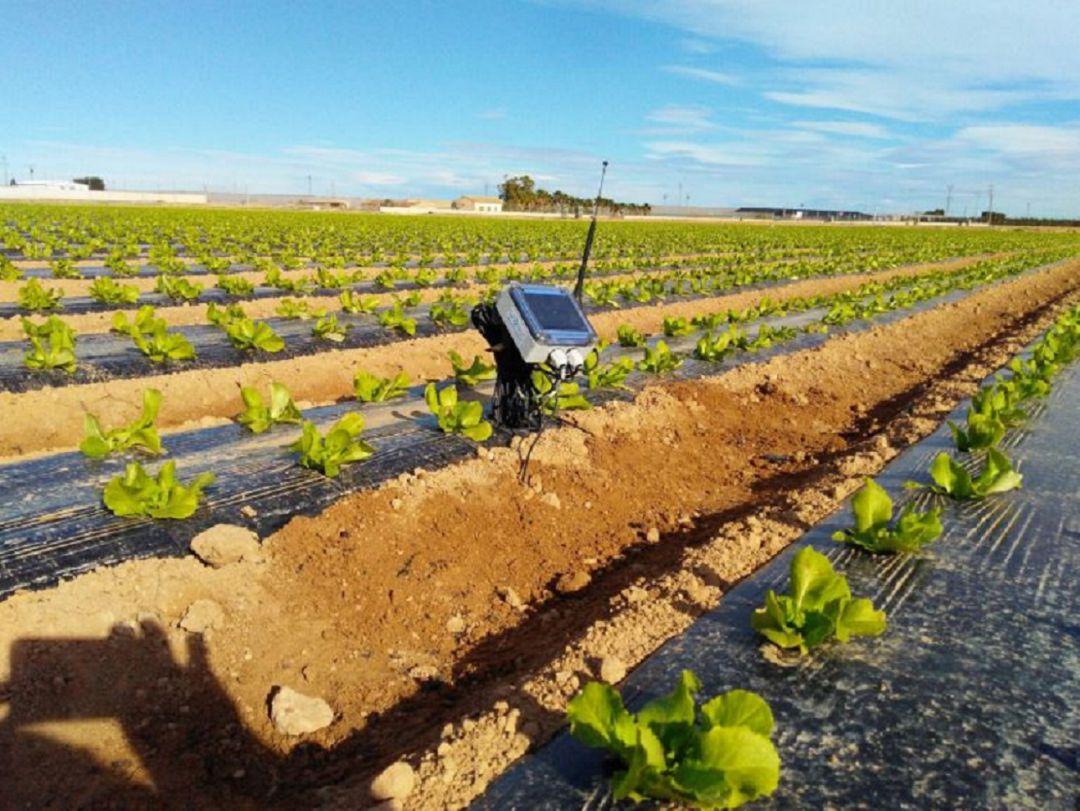 Sensores en los cultivos para optimizar aún más el agua de riego ...