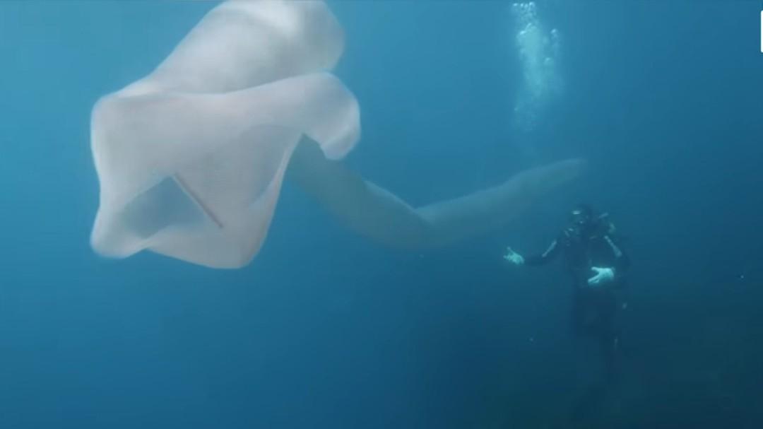 El espectacular monstruo marino que sorprendió a unos buzos