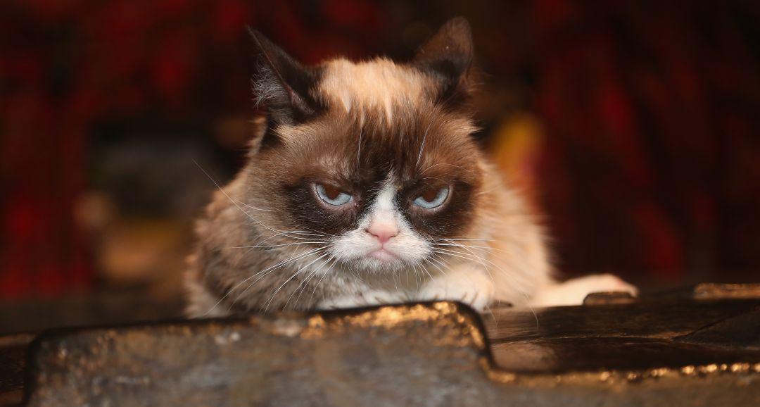 Muere Grumpy Cat, la gata que impulsó miles de memes en internet
