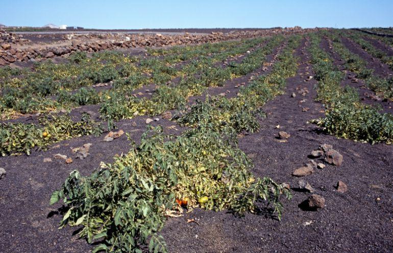Resultado de imagen de campo de canarias