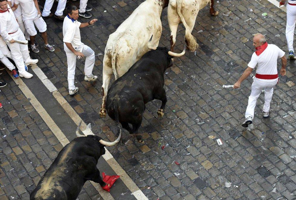Dos toros de la ganadería de Fuente Ymbro hacen su entrada a la Plaza Consistorial.
