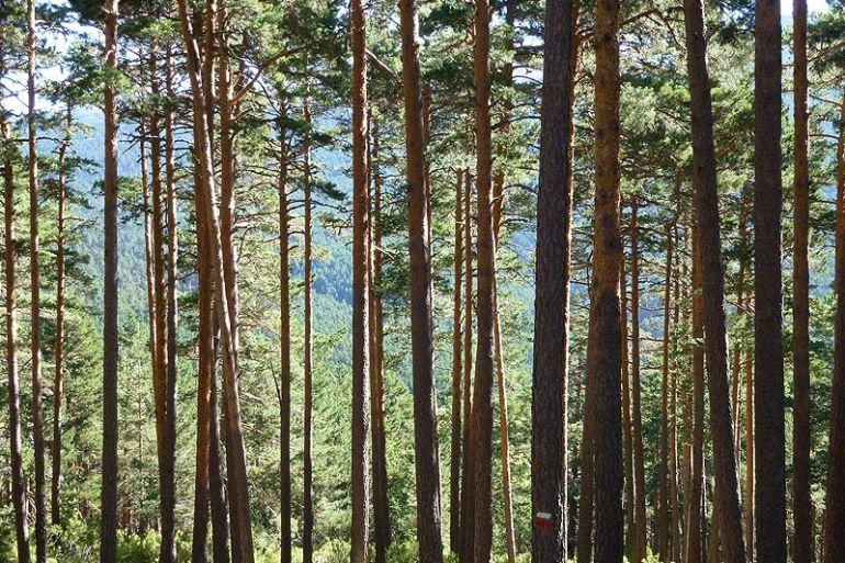 """ASOPIVA quiere que la """"suerte de los pinos"""" sea Bien Inmaterial de ..."""