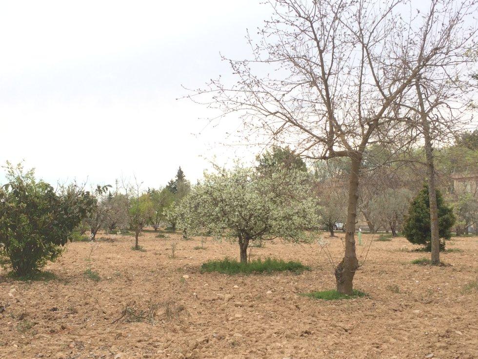 Entre los árboles que tienen en el CREA, algunos frutales