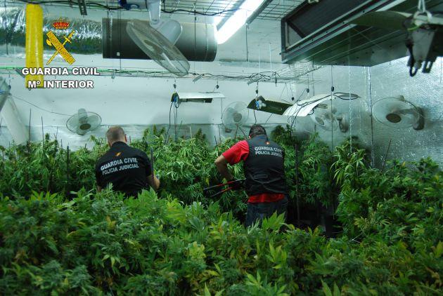 La Guardia Civil detiene a un vecino de El Casar (Guadalajara) por cultivo de marihuana. Se han incautado 3.400 plantas.: Detenido por cultivar 3.400 plantas de marihuana en El Casar