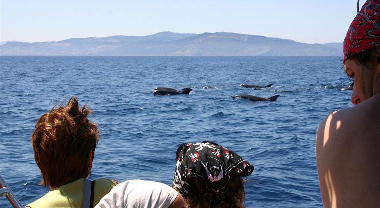 cetaceos a las 10