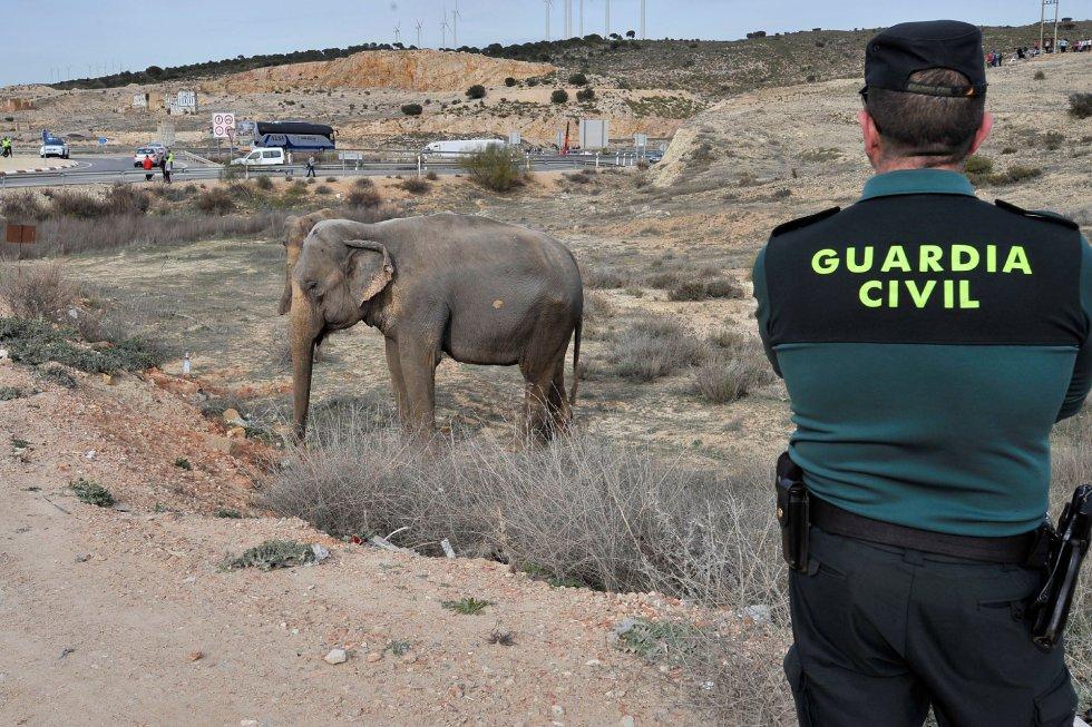 FOTOGALERÍA   Accidente de un camión con elefantes en Albacete