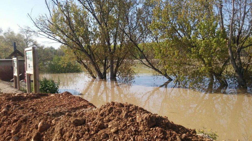 Una zona aneja al río en la localidad de Pradilla