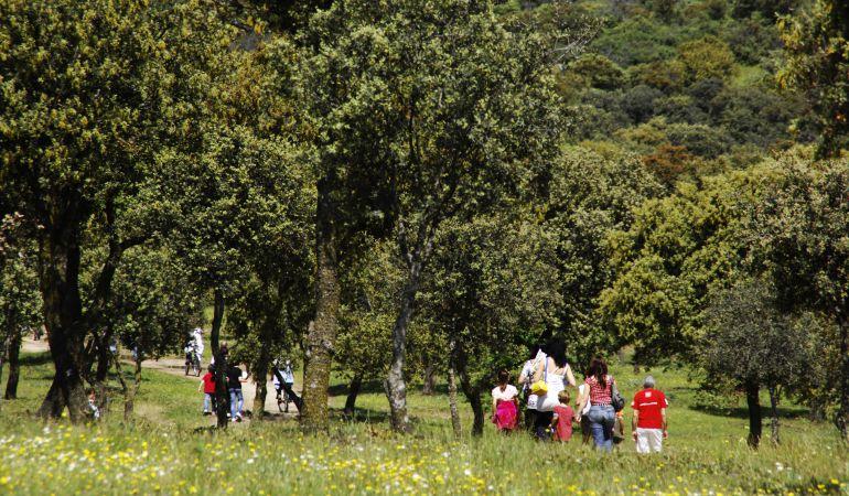 Jornada Botánica En El Centro De Naturaleza Dehesa Boyal Ser