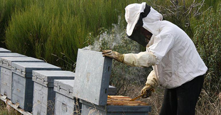 Apicultor realizando labores en colmenas