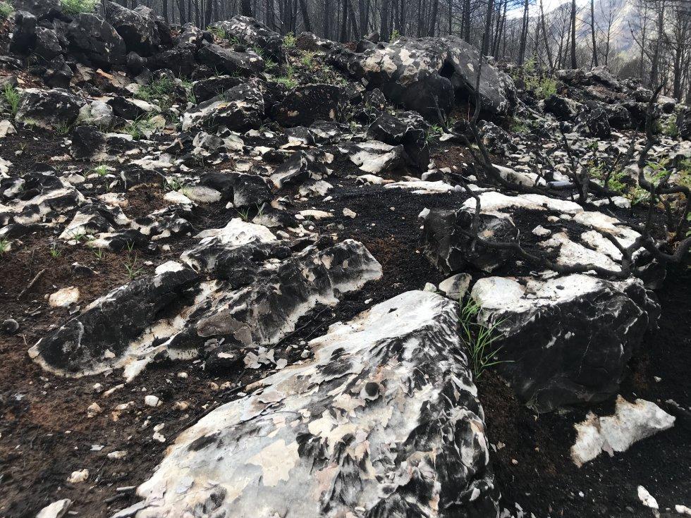 Fotogalería: El incendio de Llutxent, dos meses después