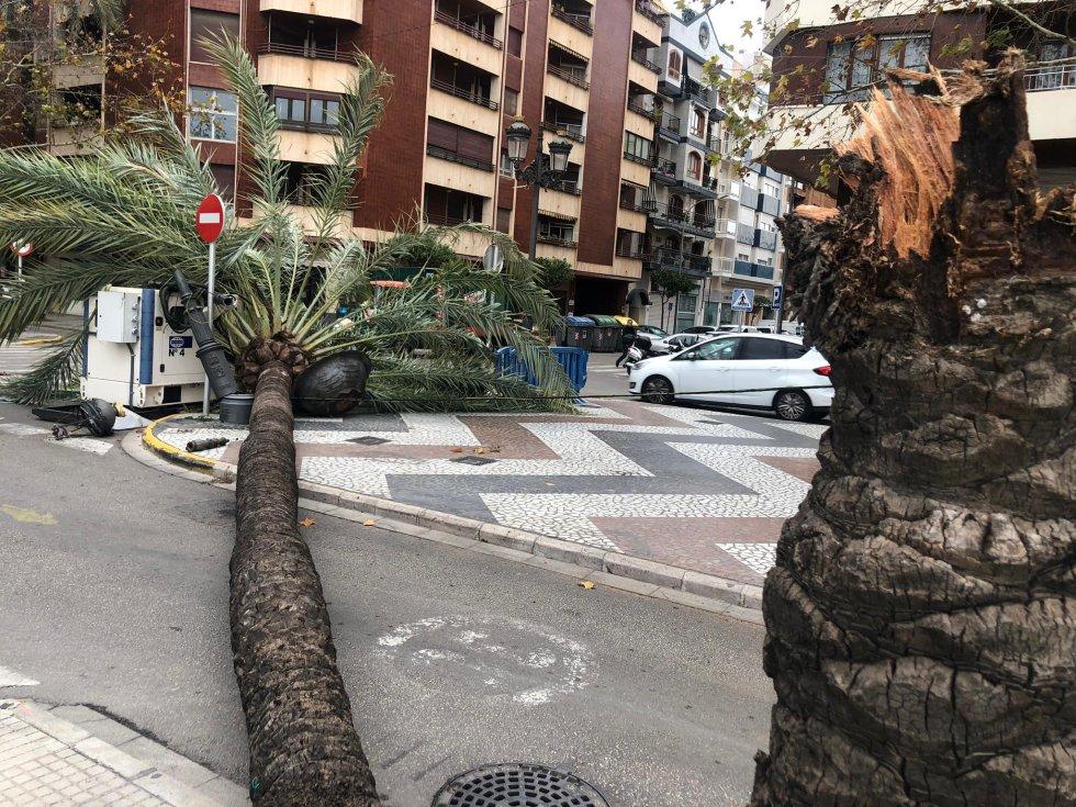 Palmera sobre la calzada en el cruce del Paseo con la calle Ciudad de Barcelona
