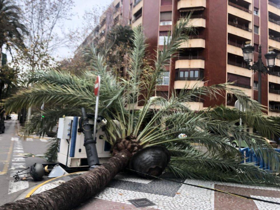 Detalle de los destrozos de la palmera caída que afortunadamente no ha ocasionado daños personales