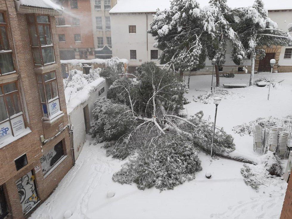 Arbol caído en Guadalajara