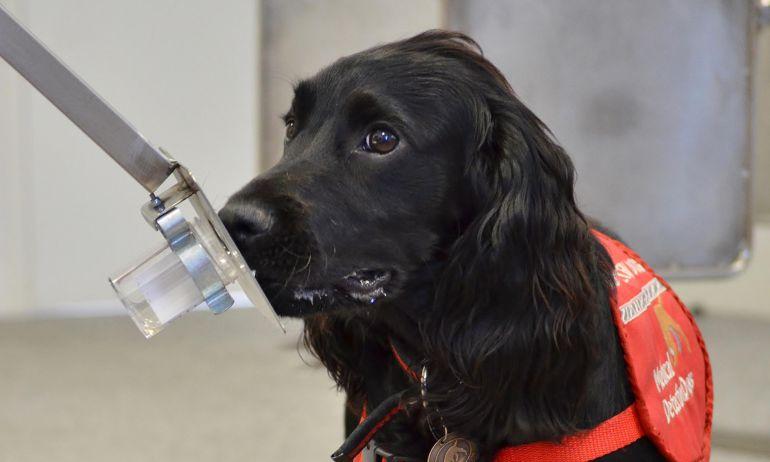 cáncer de próstata en perros vs perros