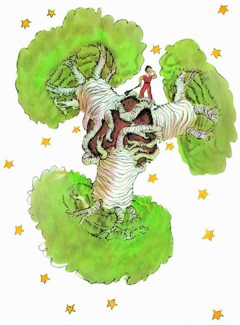 Qué Representan Los Baobabs De El Principito Para Usted