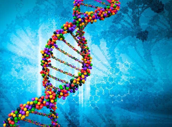 Los Genes Humanos No Pueden Ser Patentados Según El Tribunal