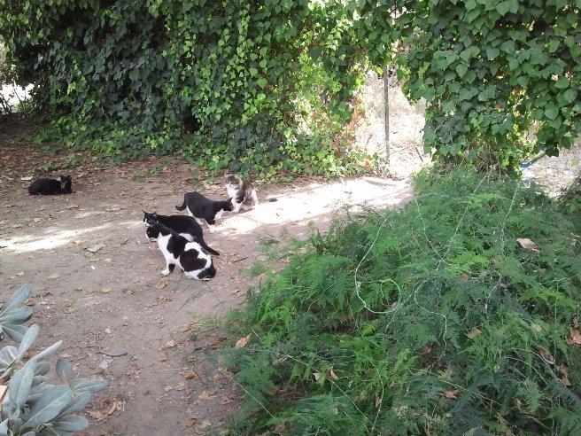 """Una colonia de gatos se ha """"apoderado"""" del espacio ocupado hace años por otros animales"""