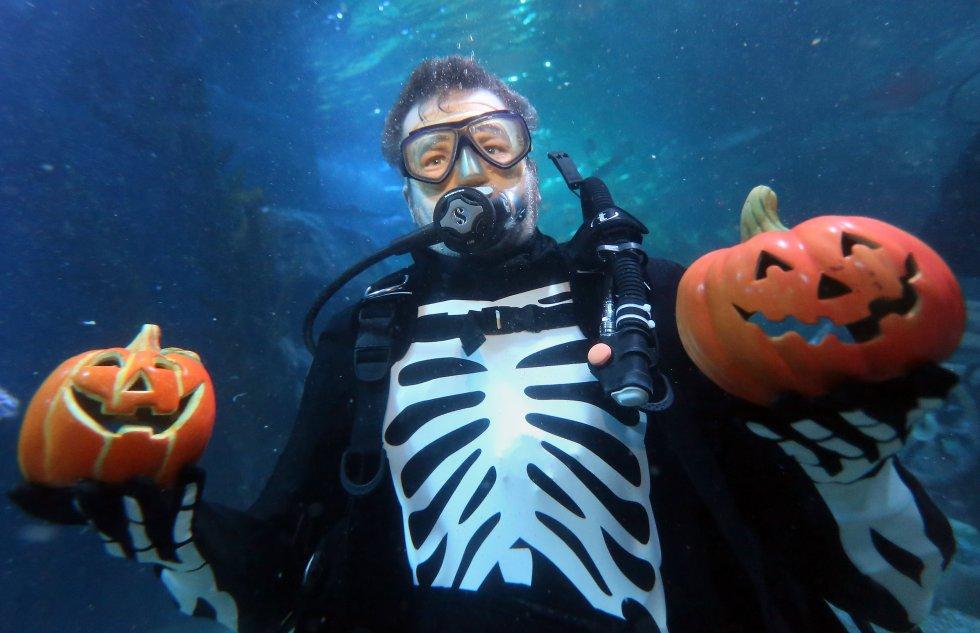 Un operario del acuario de Berlín decora la piscina con calabazas para celebrar la fiesta de Halloween
