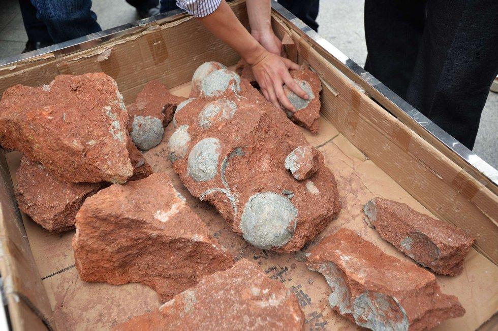 """Heyuan ha sido bautizada por los paleontólogos como """"la ciudad de los dinosaurios"""" por similares descubrimientos. De los 43 huevos descubiertos, 19 se encuentran intactos."""