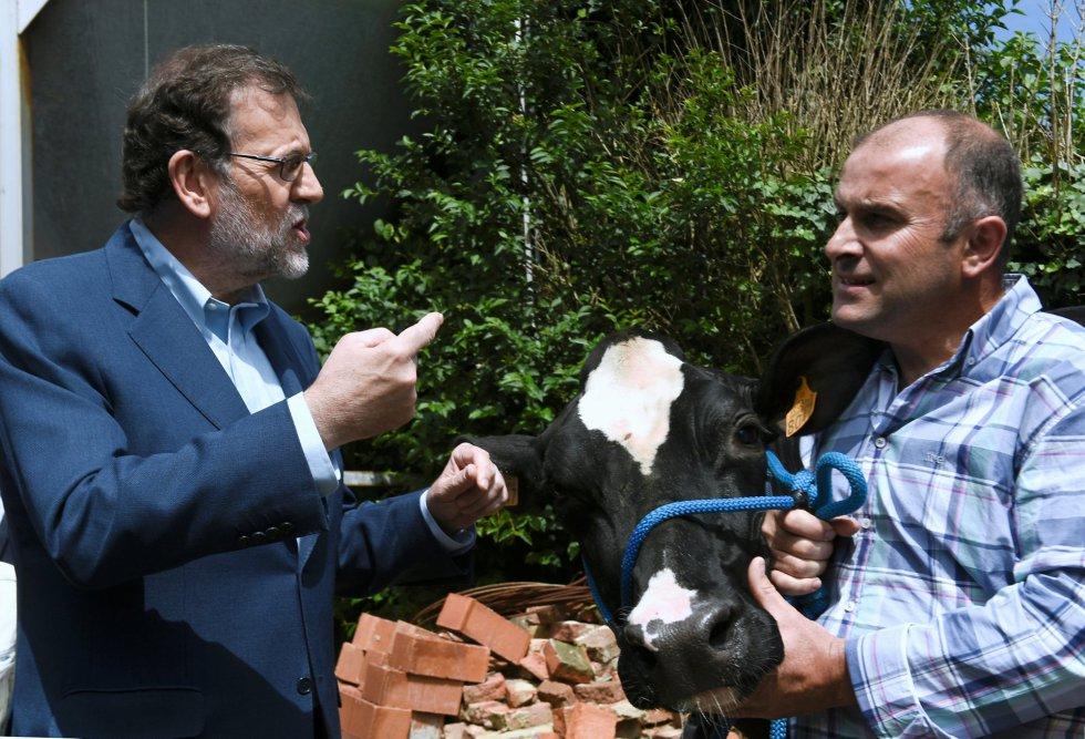 Mariano Rajoy visita la ganadería Carbayed, en Asturias, durante su acampaña electoral.