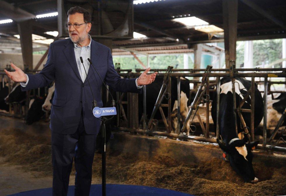 El líder del Partido Popular da un mitin en plena visita a la ganadería Carbayed, en Asturias, durante su acampaña electoral.