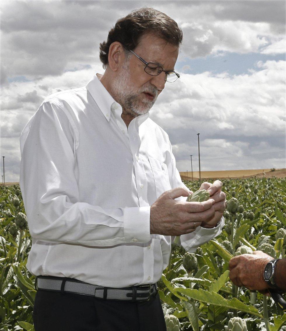 El presidente del Partido Popular, Mariano Rajoy, durante la visita a la finca de cultivo de alcachofas en Tudela.