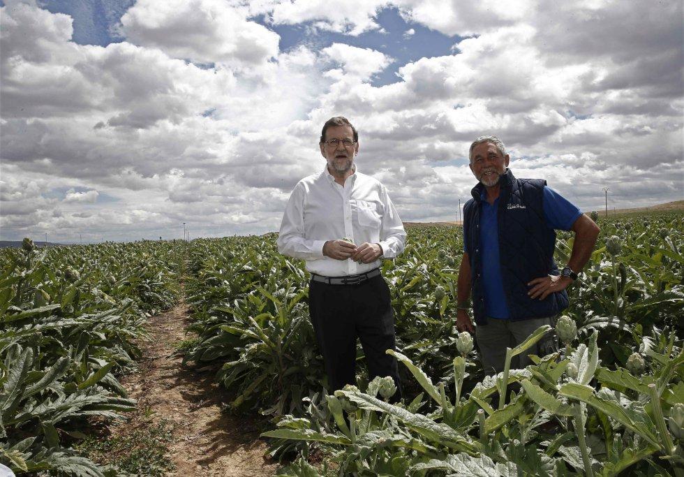 El presidente del Partido Popular, Mariano Rajoy, posaba junto al campo de alcachofas durante su visita a una finca de cultivo en Tudela.