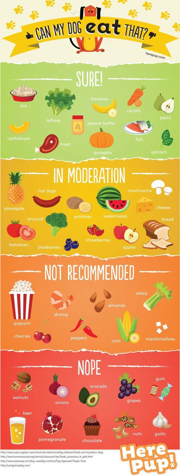 La infografía de los alimentos que puede y no puede comer un perro.