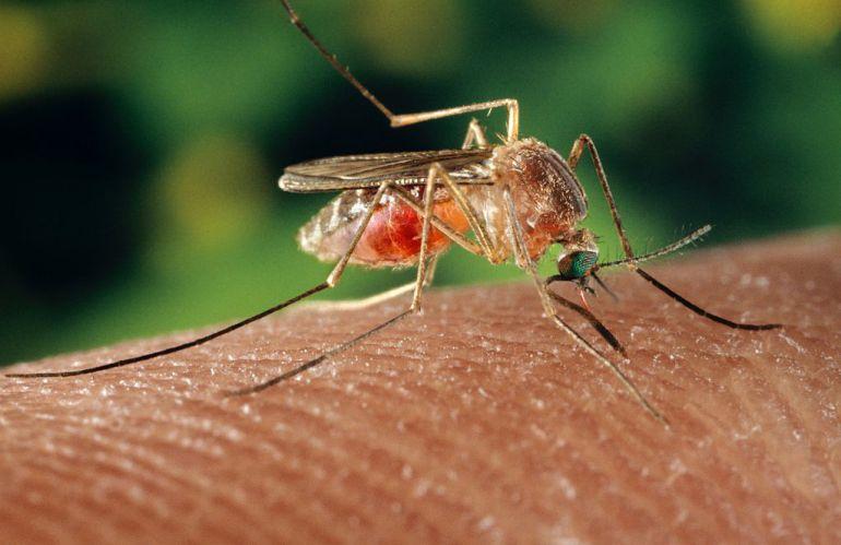 reaccion alergica picadura de mosquito en la oreja