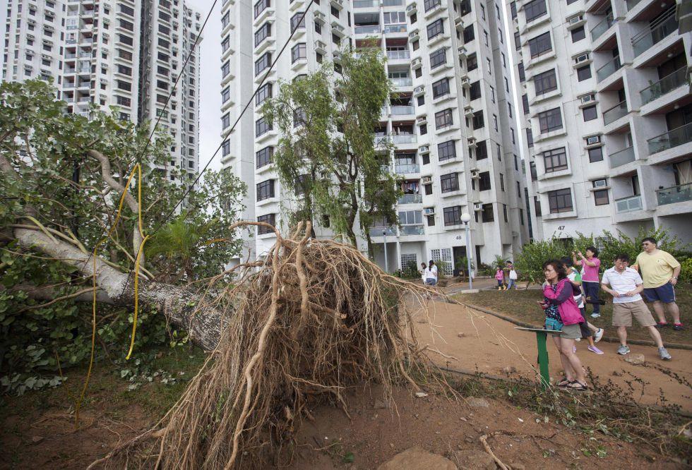 Varias personas observan un árbol arrancado de raíz Upor el paso del tifón 'Hato' en Hong Kong (China).
