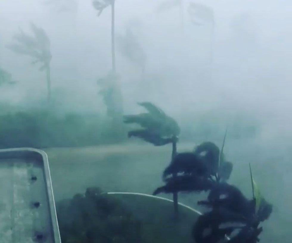El huracán Irma azota algunos árboles en Miami (Florida, EEUU)