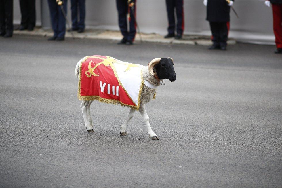 La cabra de la Legión en el desfile del 12 de Octubre en Madrid, Día de la Hispanidad.