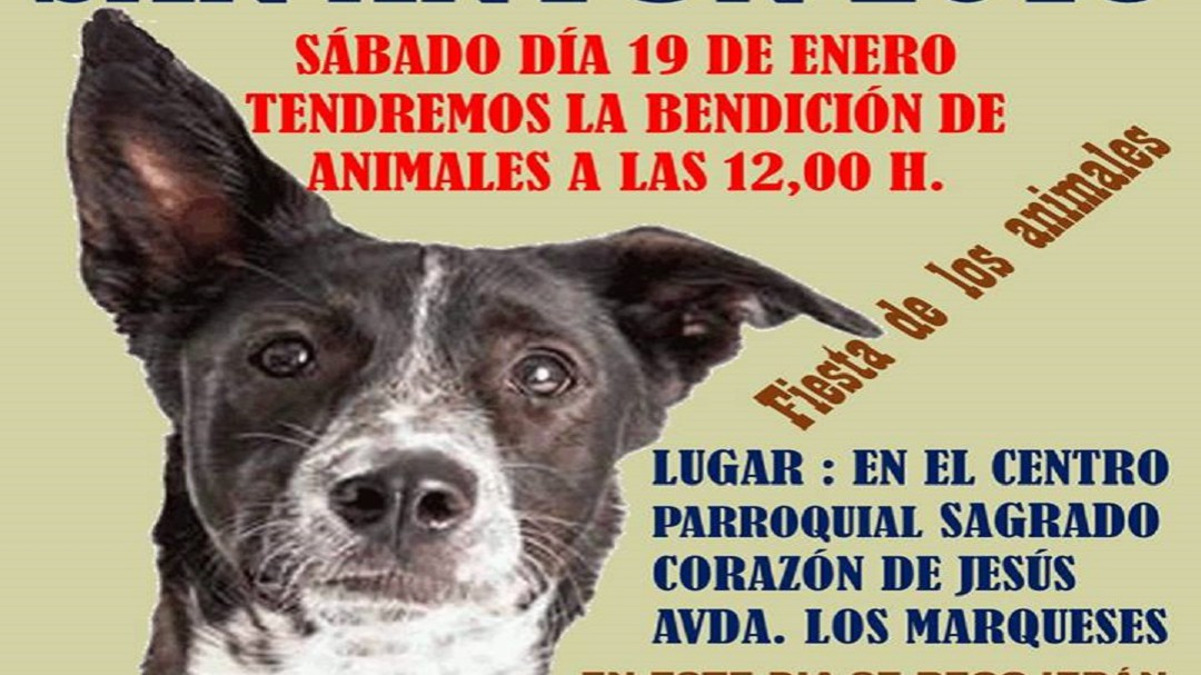 Bendición de animales solidaria