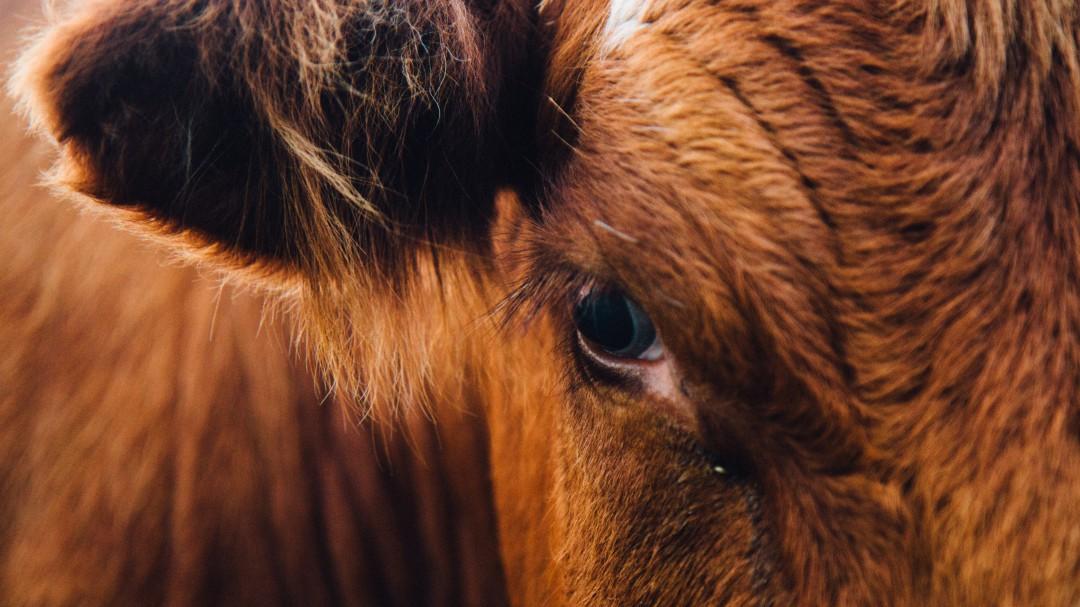 Dejar de comer carne sí ayudará a salvar el planeta