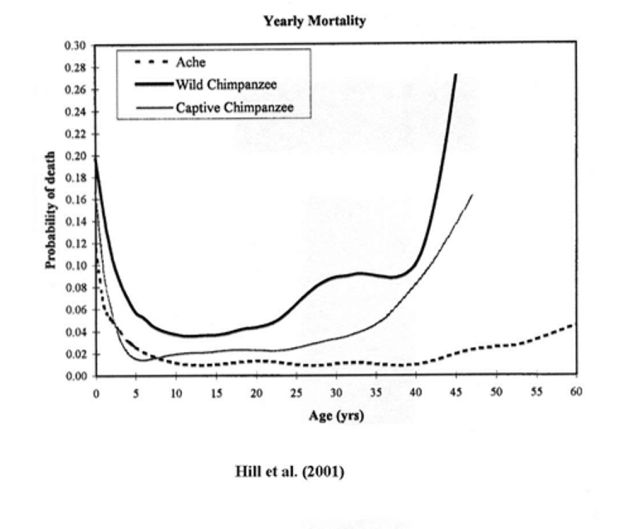 'Mortality rates among wild chimpanzees', Kim Hill et al.,