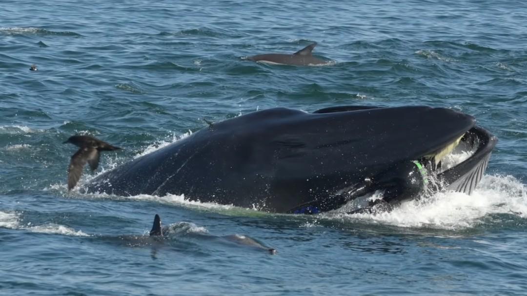 Una ballena engulle a un buzo y lo expulsa vivo en una playa