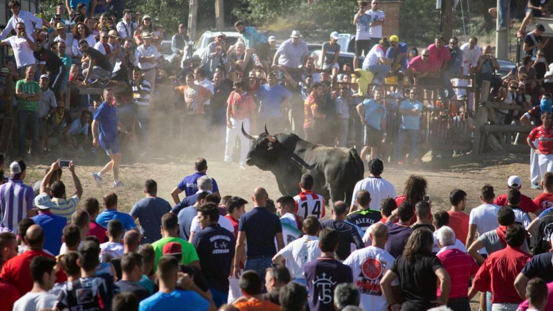 Carpetazo final al polémico Toro de la Vega: el Supremo ratifica su prohibición
