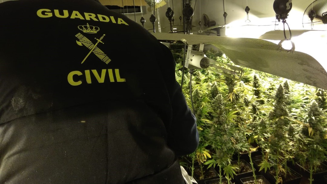 La Guardia Civil interviene casi 13.000 plantas de marihuana