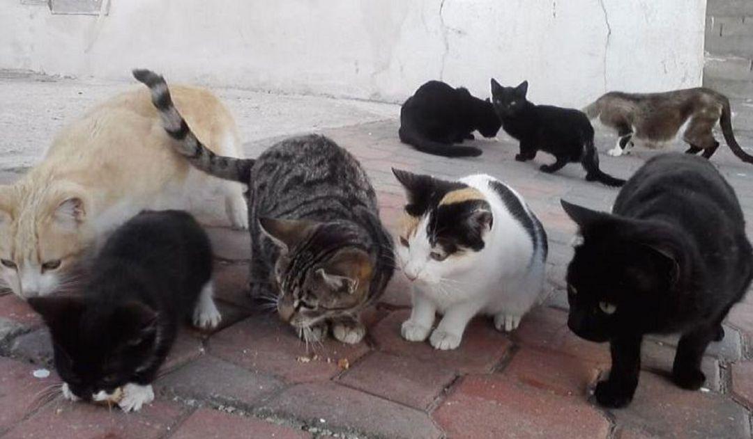 Alimentar gatos callejeros puede acarrear sanciones | Radio Aranda | Cadena  SER