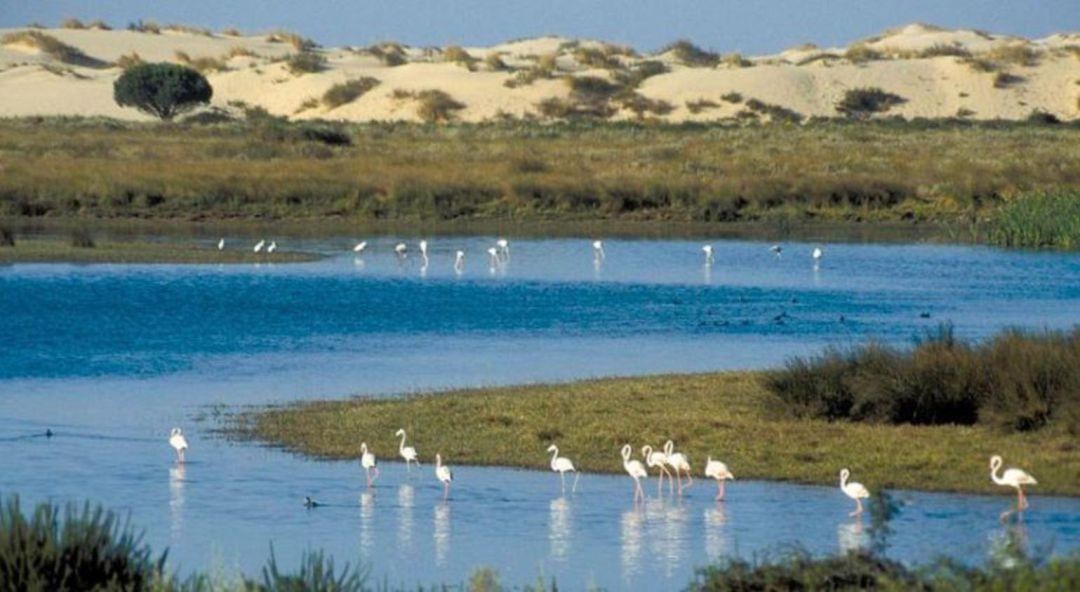 Resultado de imagen de Parque Nacional de Doñana