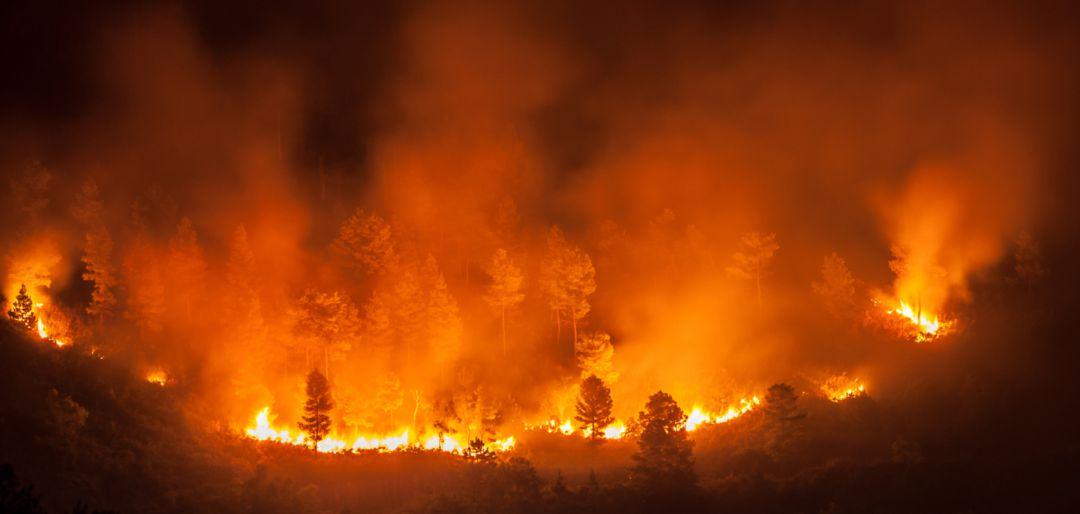 Resultado de imagen para ganado incendio brasil