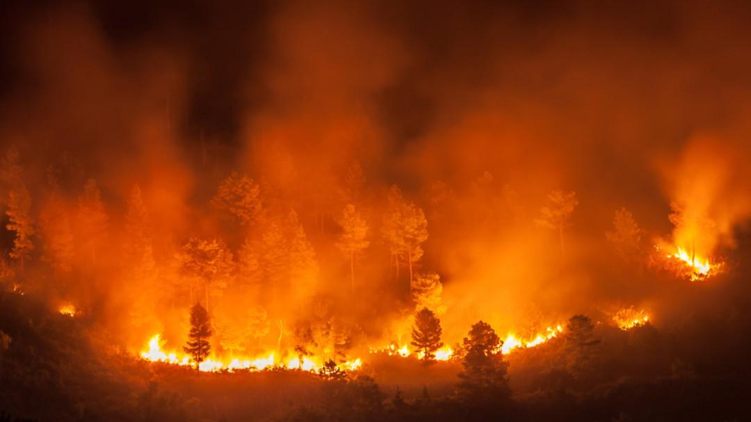 El Amazonas, en estado de emergencia por los graves incendios forestales