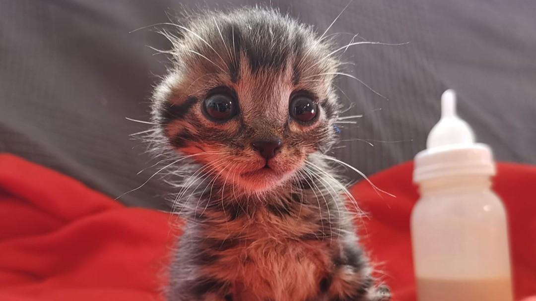 La emotiva historia de Nano, el gato sin orejas que ya ha encontrado familia