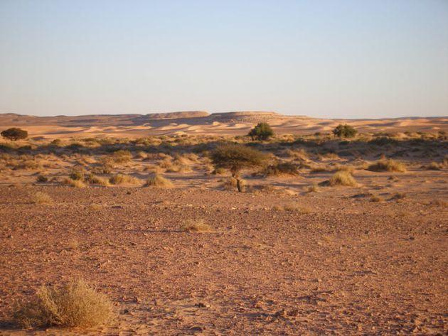 Expediciones en busca de fauna por el Sahara atlántico.