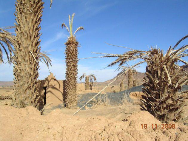 Abandono de explotaciones agrarias tras el agotamiento del acuífero en Oued Mird (sur de Marruecos).