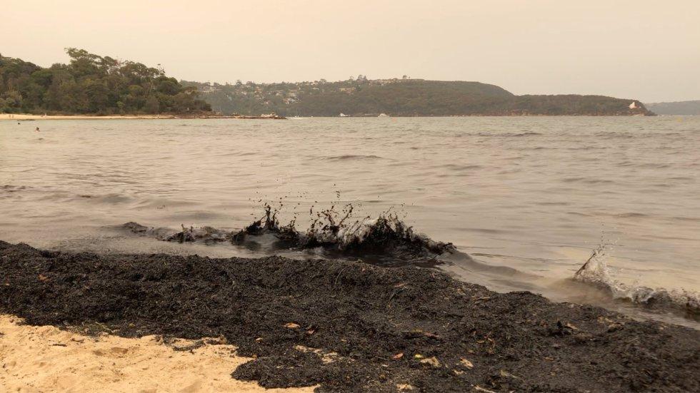 Olas de ceniza en la playa de Sídney.