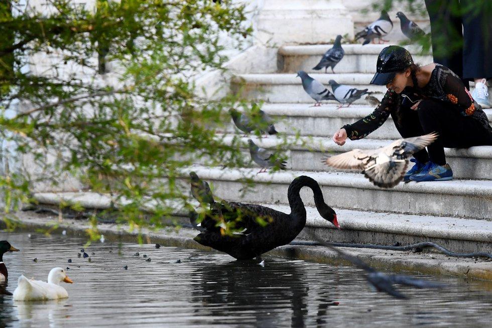 Una mujer en el estanque de el parque de El Retiro de Madrid da comida a cisnes y palomas tras poder acceder al recinto por primera vez desde la declaración del Estado de alarma.