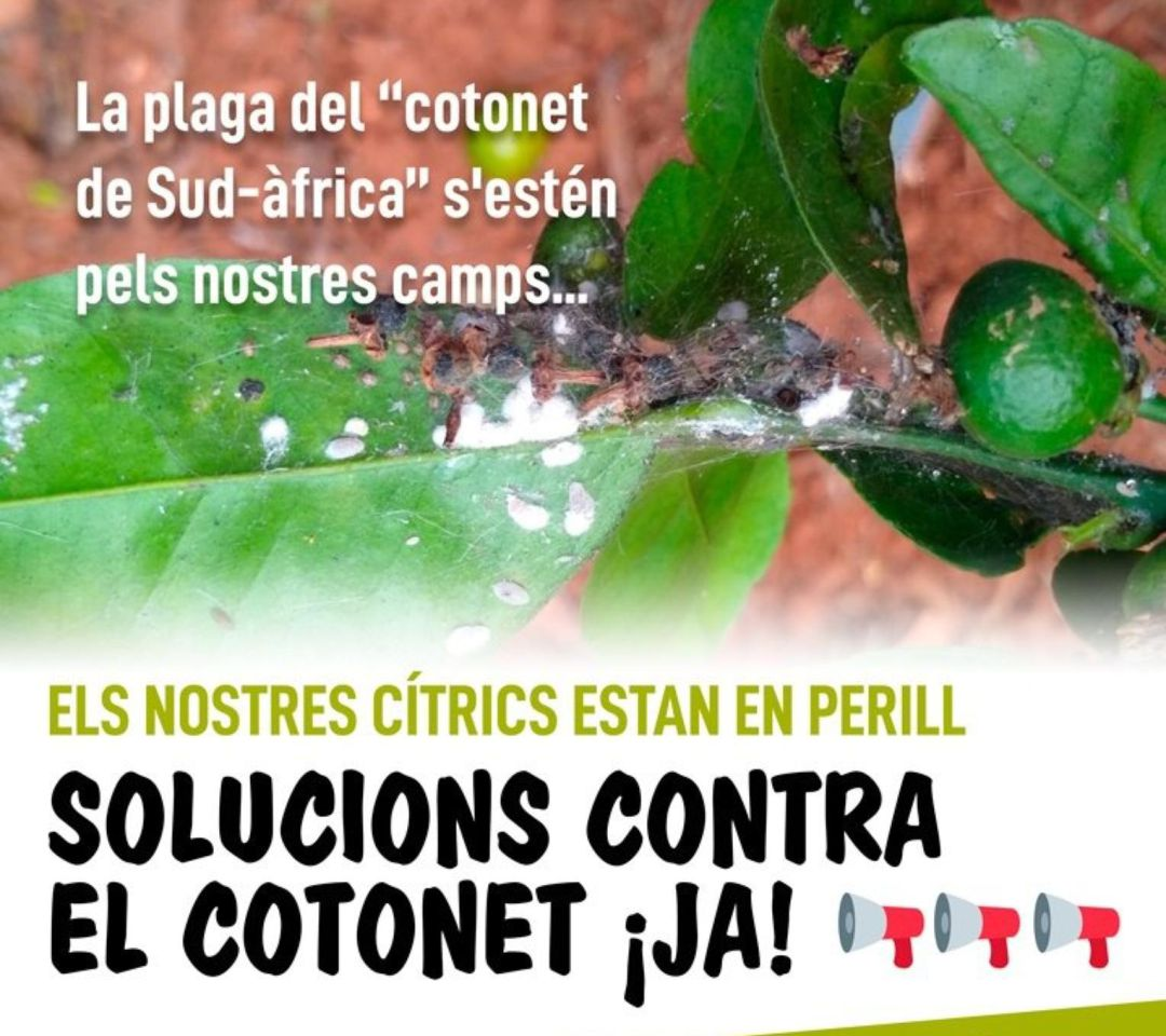 Cartel concentración