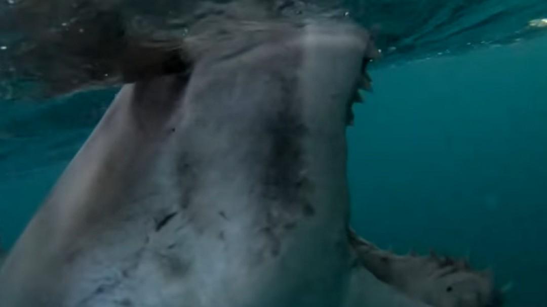 El impactante ataque de un gran tiburón blanco al bote de dos pescadores en Australia